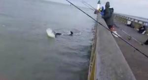 Baleine, dauphin, orque ?