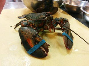 One Fighting Lobster