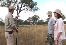 Guided game walk at Sabi Sabi