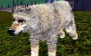 Wolf with fur shader