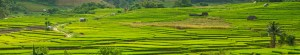 Full Panorama View of Step Rice Farmer on the Mountain of Mae Cham, Chiangmai Thailand - Source: Liangsutthisakon, Wes. Full Panorama View of Step Rice Farmer on the Mountain of Mae Cham, Chiangmai Thailand. Digital Image. Shutterstock, [Date Published Unknown]