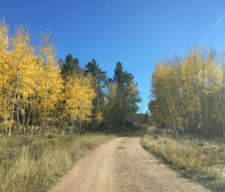 A dirt road between yellow Aspens and green pine trees leads to Praise Mountain