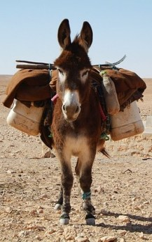 A donkey carries the load of another.