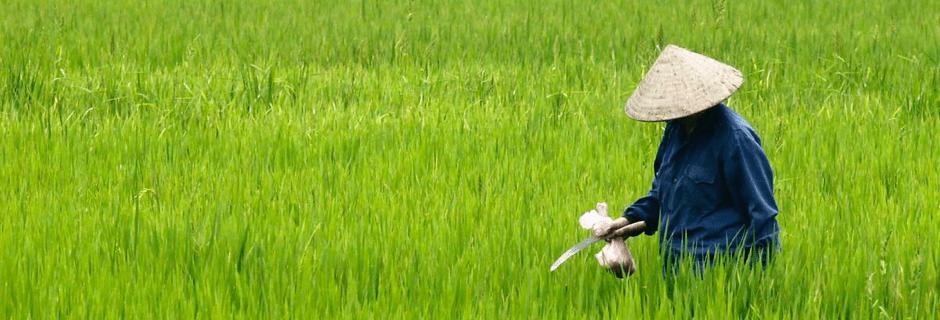 vietnamfields