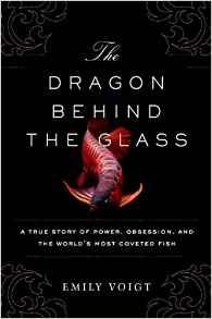 DragonBehindGlass - DragonBehindGlass