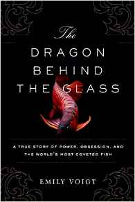 DragonBehindGlass - The Dragon Fish of Southeast Asia