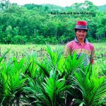 Oil Palm  - New Releases on Indonesia
