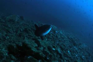 la-ciotat-23-24-juin-2012 8832