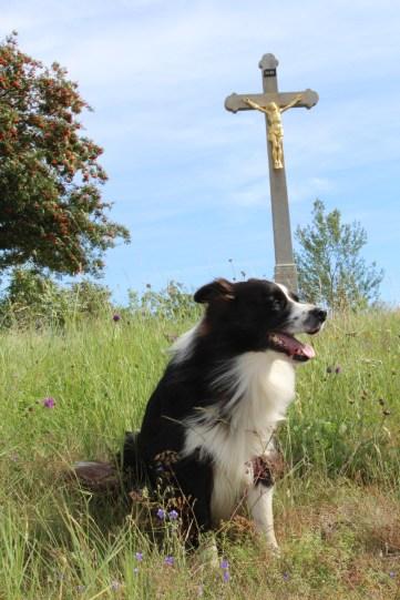 Ovčí hlídač z Vlašimi - pes Candy.