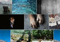Flickr-like Photo Grid In Vanilla JavaScript