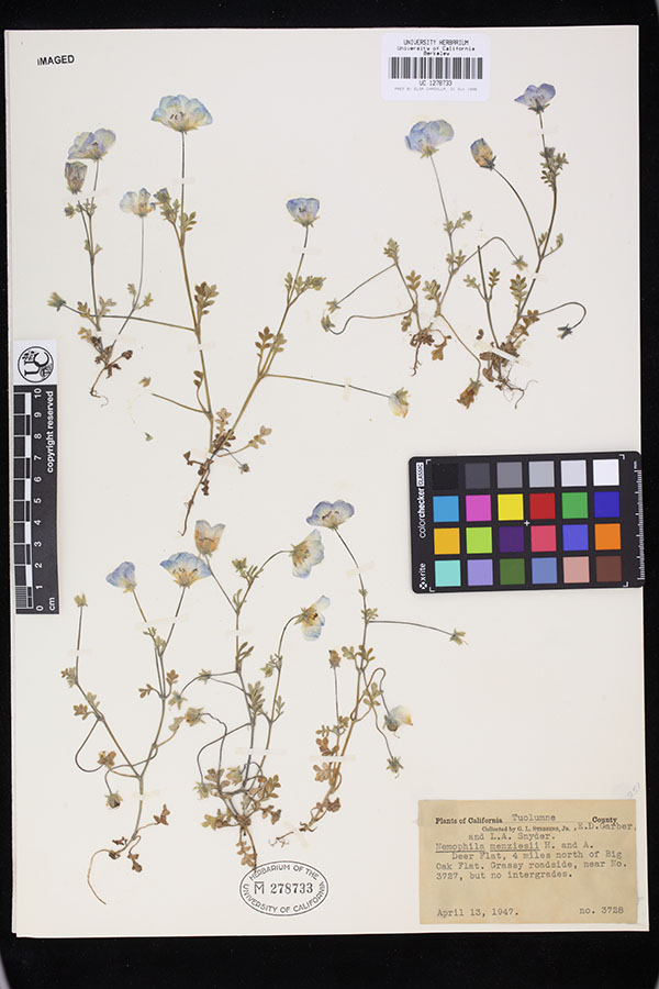 A digitized herbarium specimen sheet (Consortium of California Herbaria)