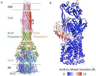 Molecular structure of a MDR pump