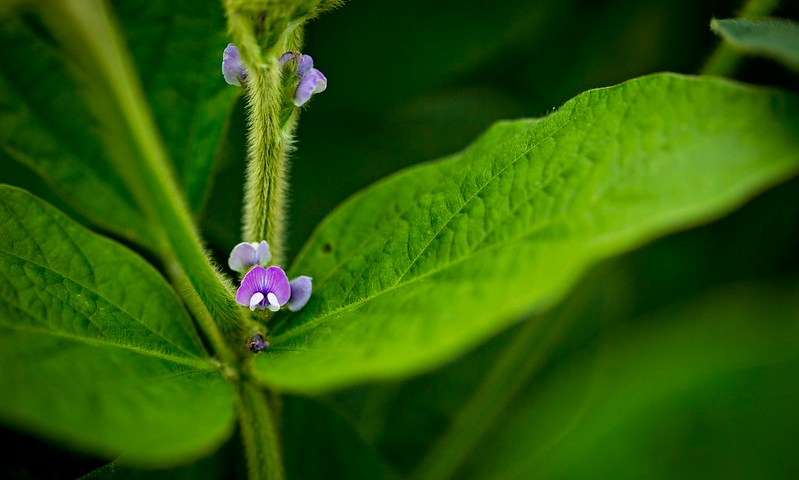a small purple flower