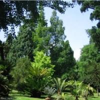 Ambiente e natura: a Napoli la Festa dell'Albero