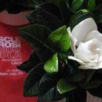 La Gardenia di AISM: la Sezione di Napoli cerca volontari