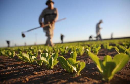 """""""TERRE COLTE"""", il bando per valorizzare i terreni incolti o abbandonati nel mezzogiorno"""