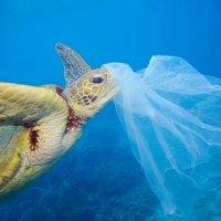 Liberare i mari dalla plastica: WWF rilancia la petizione su change.org