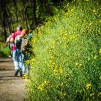 11 maggio: partecipa con We Can alla passeggiata ecologica sul Parco nazionale del Vesuvio