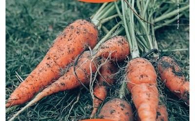 COSÌPERNATURA. Il progetto di Legambiente e NaturaSì contro lo spreco alimentare