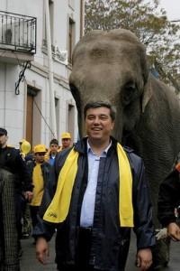 manea elefant1
