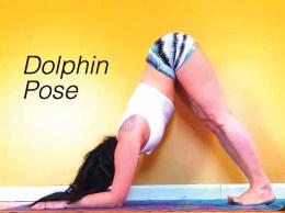 focus dolphin pose