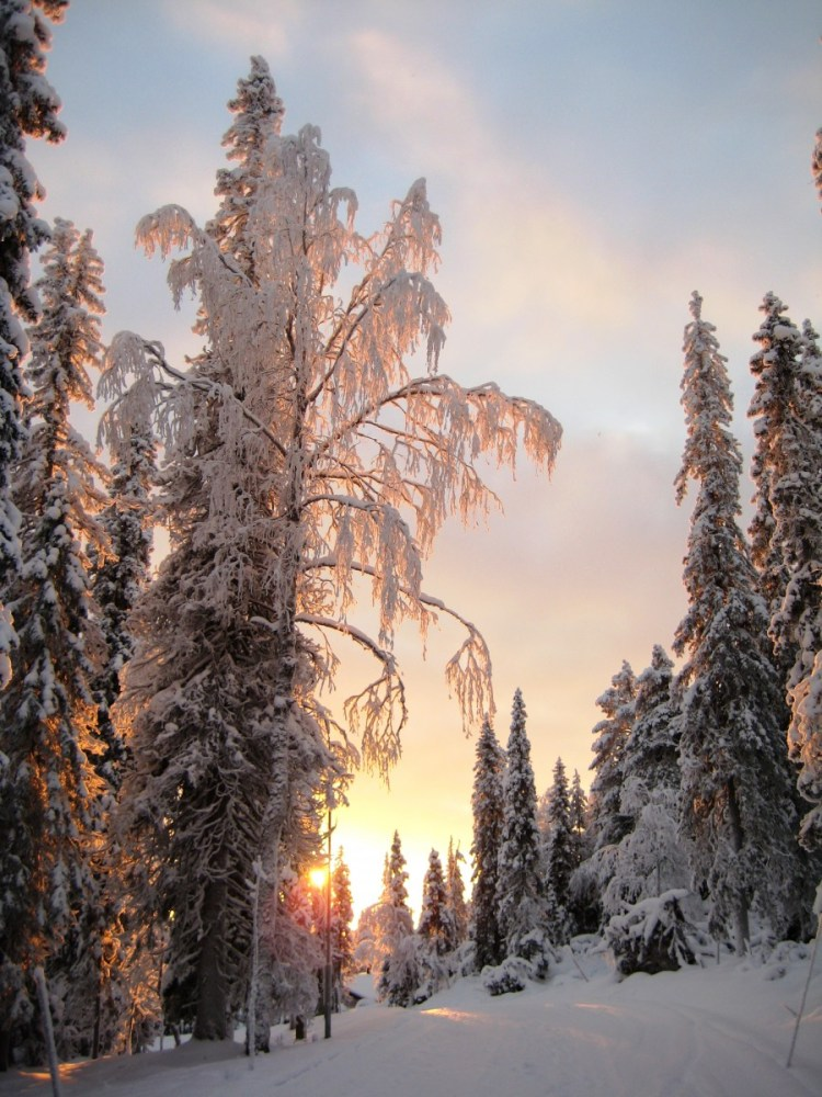 lapland in winter