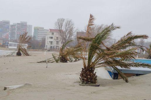 Palmierilor nu le place furtuna din Mamaia. FOTO Cătălin Schipor