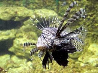 Pești exotici la Acvariul Constanța. FOTO Adrian Boioglu