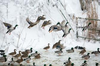 Păsări la Microrezervația Constanța. FOTO Ștefan Ciocan
