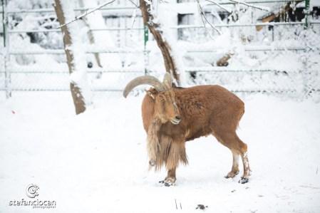 Animale la Microrezervația Constanța. FOTO Ștefan Ciocan
