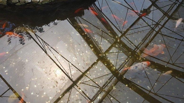Bazinul peștilor, poluat cu bani. FOTO Delfinariu Constanța
