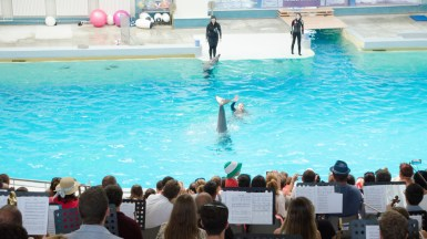 Orchestra Bigg Dimm a'Band a ținut un mini spectacol în timpul unei reprezentații a delfinilor. FOTO Catalin Schipor