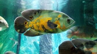 Pești exotici la Acvariul Constanța. FOTO Cătălin Schipor