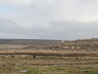camp, cioban cu oi,