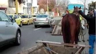 Polițiștii locali constănțeni au scos din trafic mai multe căruțe. FOTO Poliția Locală Constanța
