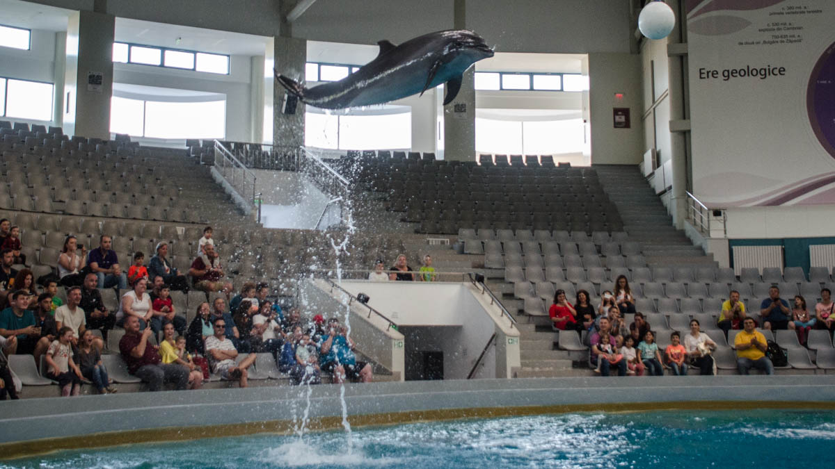 Delfini Delfinariu (17)