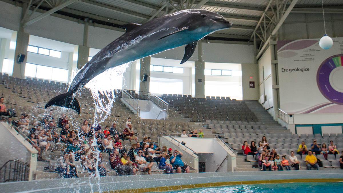 Delfini Delfinariu (19)