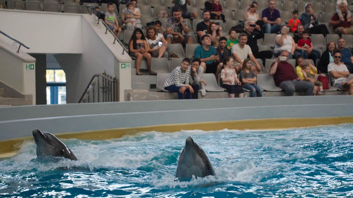 Delfini Delfinariu (24)