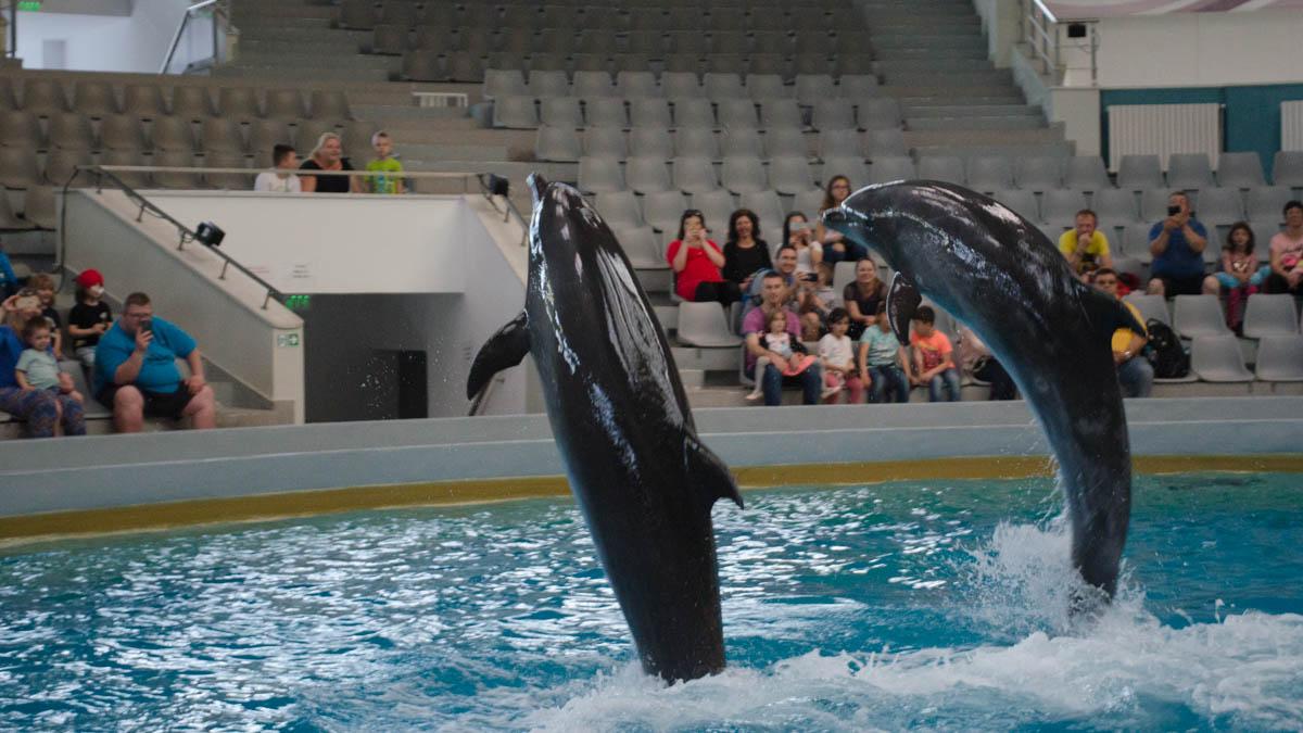 Delfini Delfinariu (28)