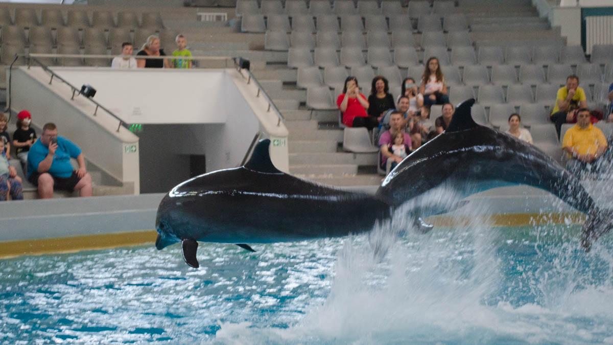 Delfini Delfinariu (29)