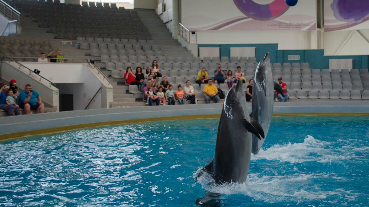 Delfini Delfinariu (30)