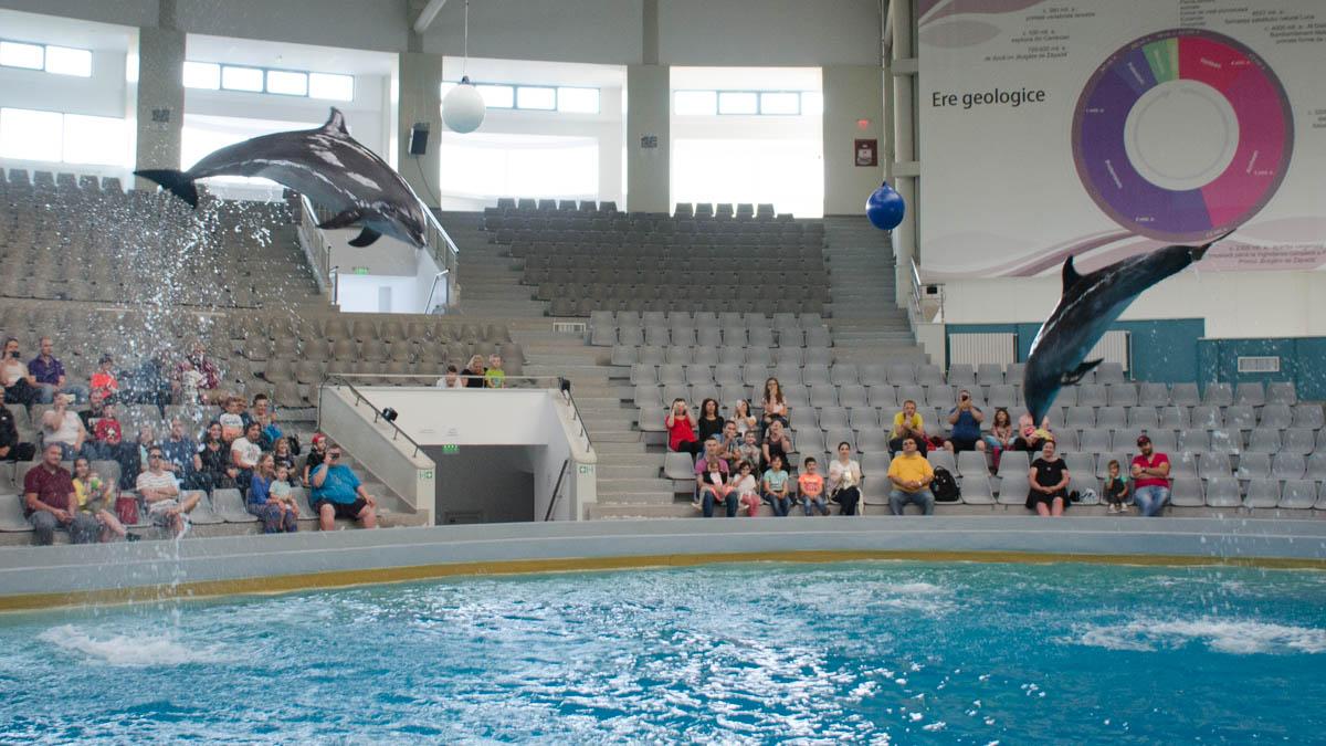 Delfini Delfinariu (40)