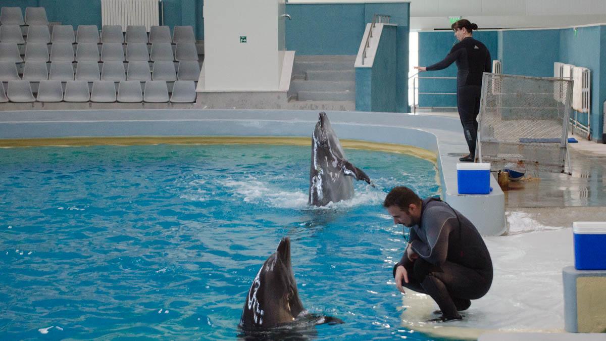 Delfini Delfinariu (49)