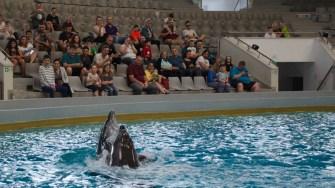 Delfini Delfinariu (55)