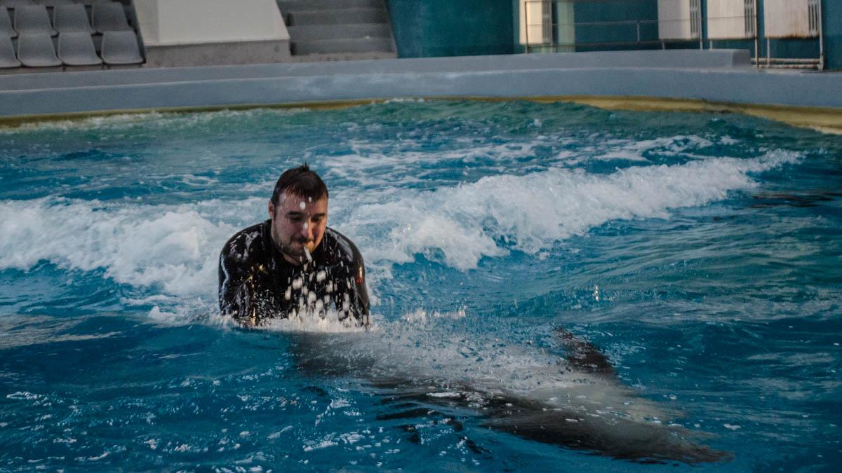 Delfini Delfinariu (68)