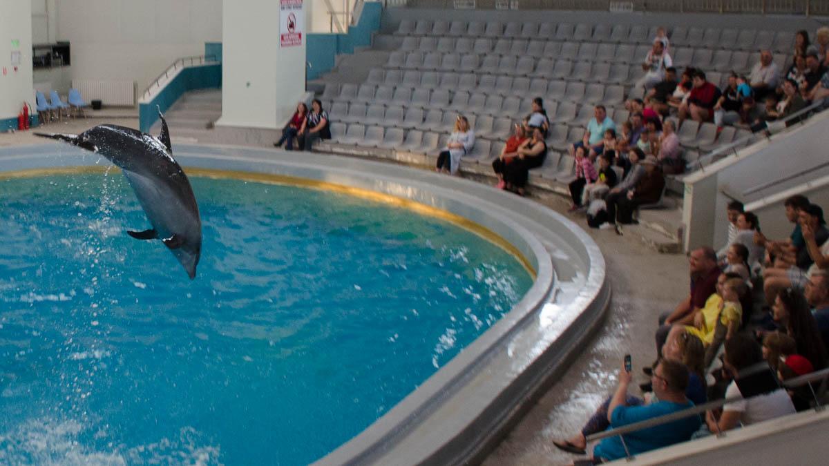 Delfini Delfinariu (7)