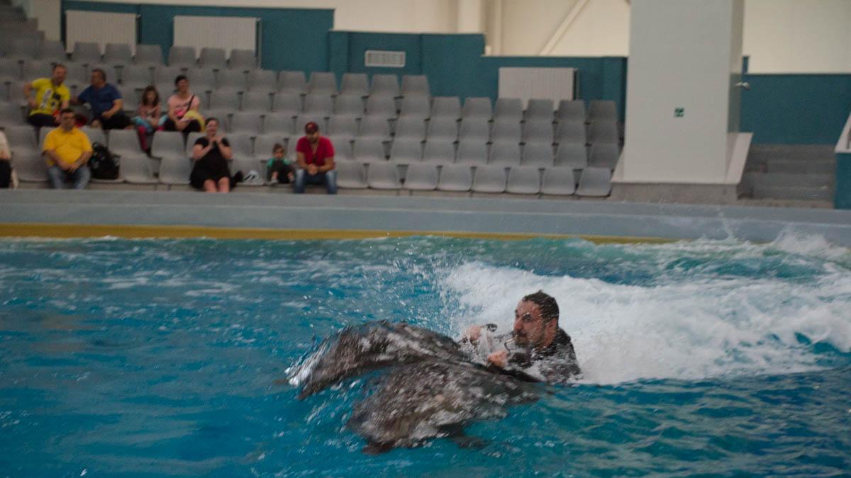 Delfini Delfinariu (70)