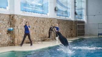 Leii de mare de la Delfinariul Constanța în spectacol. Foto Cătălin SCHIPOR