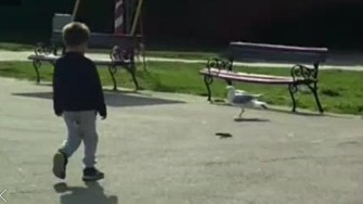Șarpele a apărut printre copii la locul de joacă. FOTO Captură Video