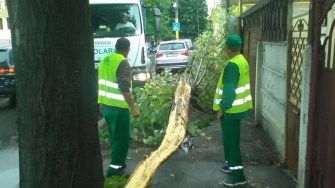Copac căzut în urma furtunii. FOTO Polaris M Holding / Arhivă